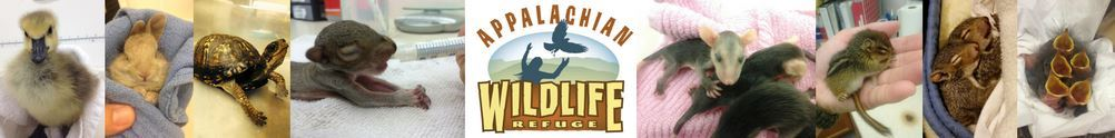 Appalachian Wild's Home Page