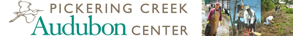 Pickering Creek Audubon Center's Home Page