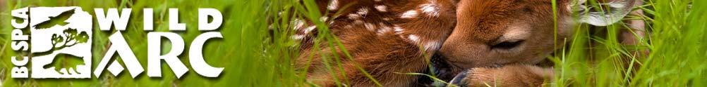 BC SPCA - Wild ARC- Victoria BC's Home Page