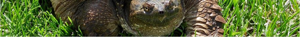Turtle Pond Wildlife Centre's Banner